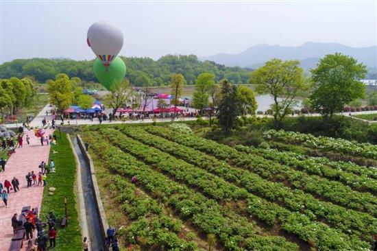 第二届铜陵梧桐花谷风景区牡丹花会盛大启幕