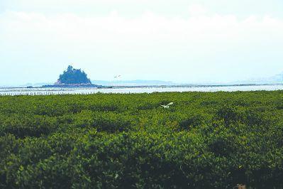 """莆田湄洲岛:生态优先 """"一地三岛""""打造高颜值"""