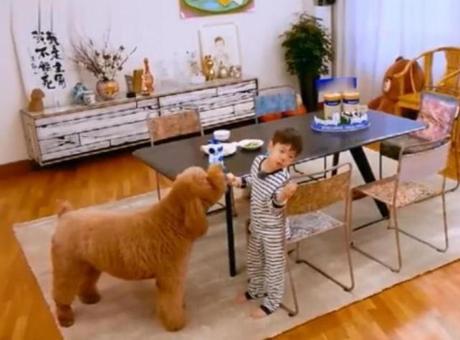 霍思燕家里猫上灶台偷早餐 狗从嗯哼手里抢吃