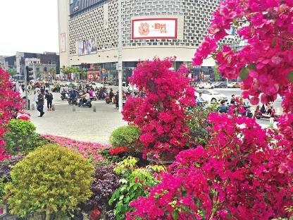 超2万株特色花卉 打造浪漫花街