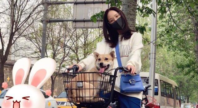 陈乔恩骑共享单车把狗放车篮里遭网友吐槽:人和狗都不安全