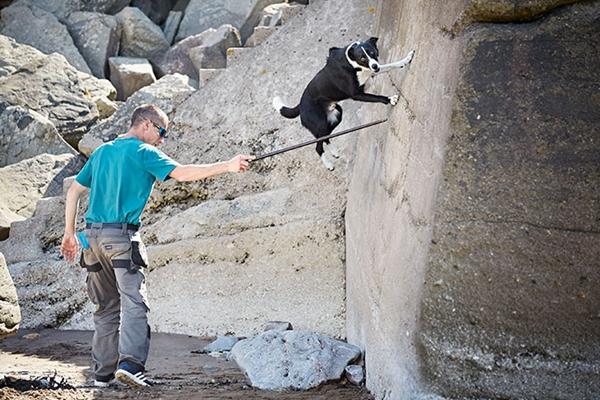 """打破吉尼斯世界纪录的""""跑酷牧羊犬"""""""