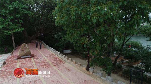 上杭官庄畲族乡 加强古樟树群保护与开发