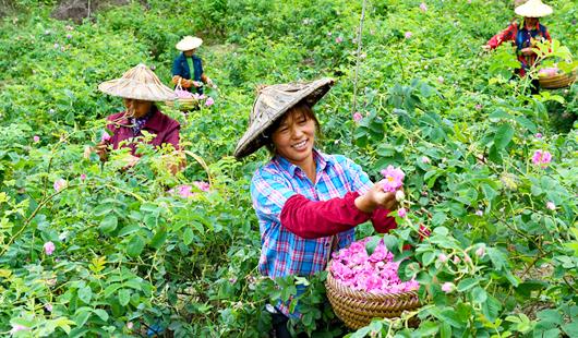 永泰:发展生态产业 助推乡村振兴