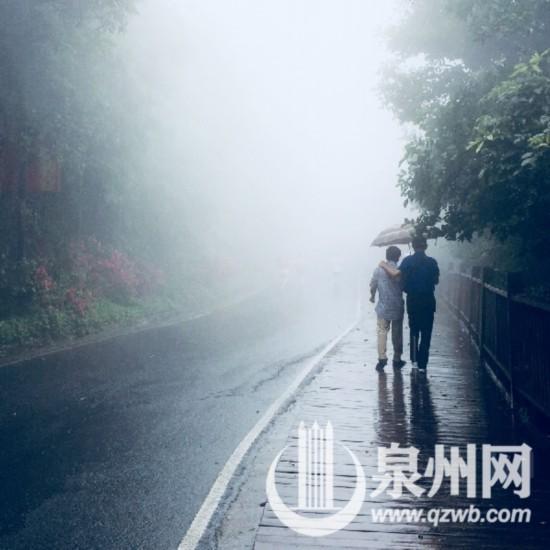 泉州清源山:初夏山间油桐花落宛如飘雪