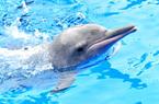 """妈祖诞日成为""""中华白海豚保护宣传日"""""""