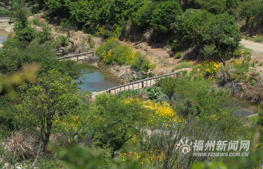 福州鼓岭五月迎来新一轮花季 红色三叶草花连片盛开