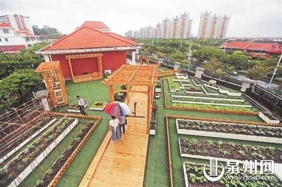 """泉州东海:种植箱""""搭积木"""" 楼顶建起空中菜园"""