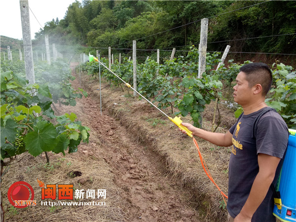 龙岩连城大野花溪种养结合建设新型生态农场