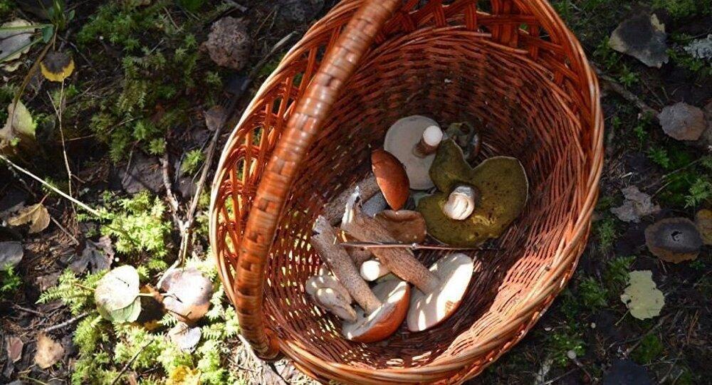 伊朗西部720人食用野生蘑菇中毒 9人丧命