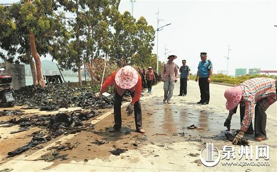 路边晒海带 不卫生又有交通隐患 执法人员劝导养殖户
