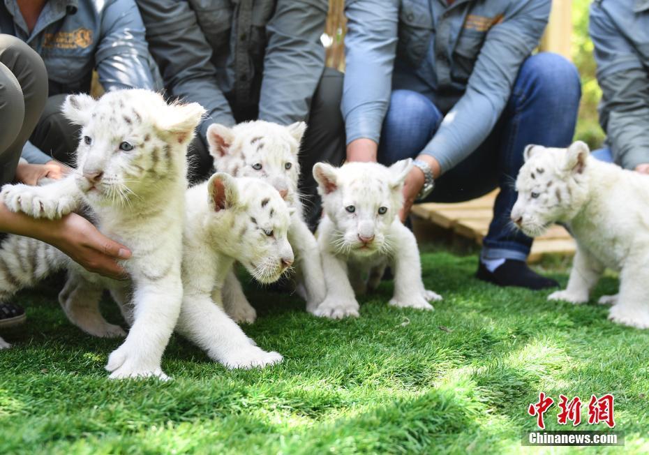 济南野生动物世界龙虎国际官网五胞胎与游人见面 外貌呆萌