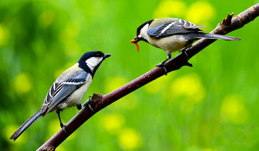 山青水秀鸟飞 寻找初夏大美之鸟