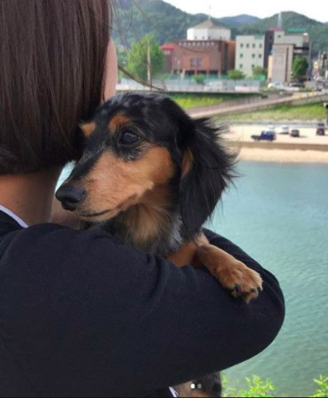 SHINee钟铉的狗找到了!姐姐晒照报平安(图)