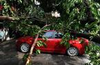 狂风暴雨突袭福州 大树被连根拔起小车被压