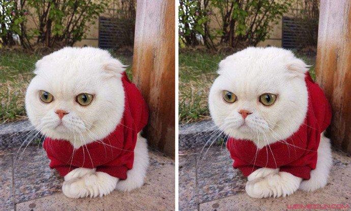 抖音可爱的小猫简笔画