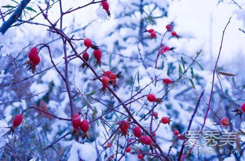 抖音一朵花一棵树一座房子是什么歌谁唱的 红山果歌词