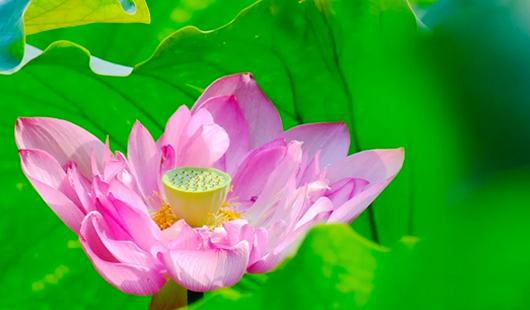福建泉州:六月东湖,生如夏花