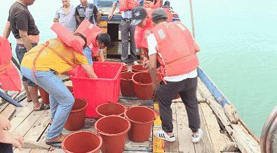 改善平潭海域生态环境 21万只中国鲎幼苗放流大海