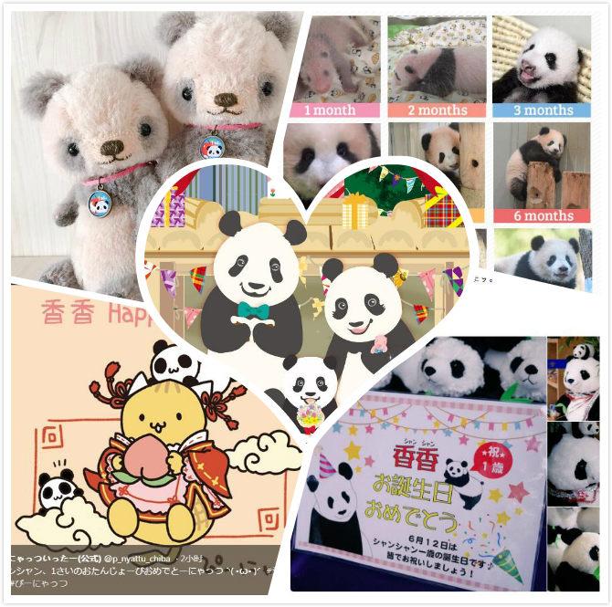 """旅日大熊猫""""香香""""迎周岁 4000名日本粉丝排队庆生"""