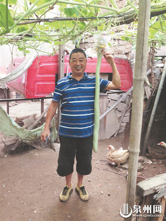 泉州市民家门口随手种菜 长出1.07米长葫芦瓜