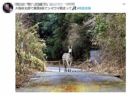 斑马逃亡、列车脱轨…… 大阪地震后网络谣言不断