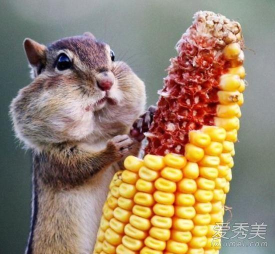 会所啃玉米有什么深层次内涵 会所啃玉米是什么服务