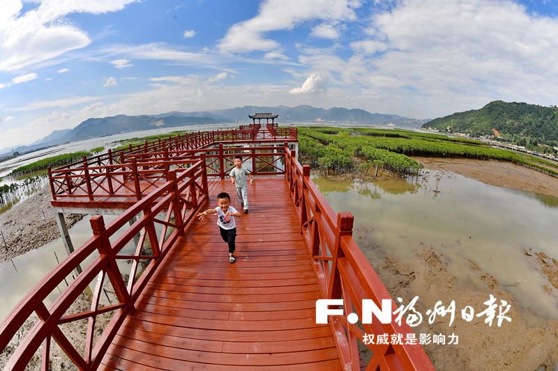 """罗源湾红树林栈道正式对外开放 """"近""""享生态美景"""