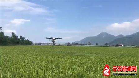 植保无人机飞防 助力云霄现代农业发展