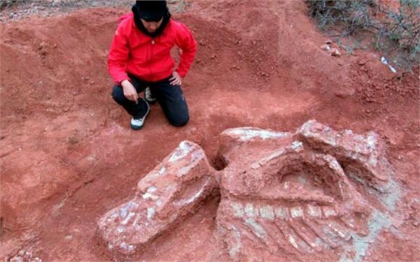 巨型恐龙遗骸出土有什么重大发现?阿根廷巨型恐龙骨头图片曝光