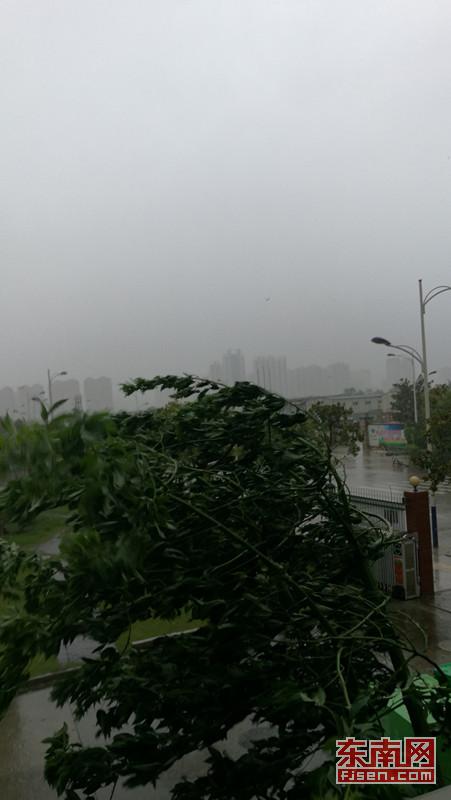 宁德中心城区狂风大作,雨势猛急