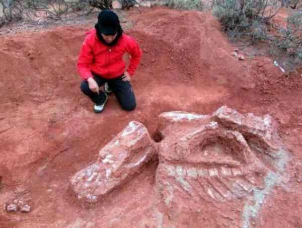 巨型恐龙遗骸出土,这是四足的草食动物!网友:阿根廷这个地方要火了