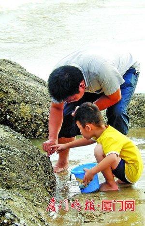 千人海边挖花蛤 专家称花蛤能净化水质不提倡采挖