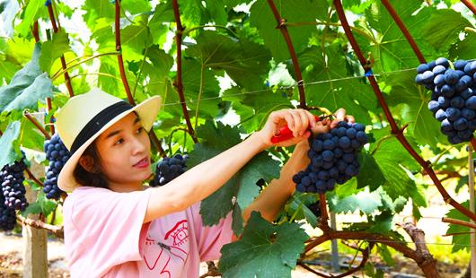 福建德化生态特色农业:山坡更绿 农家更富