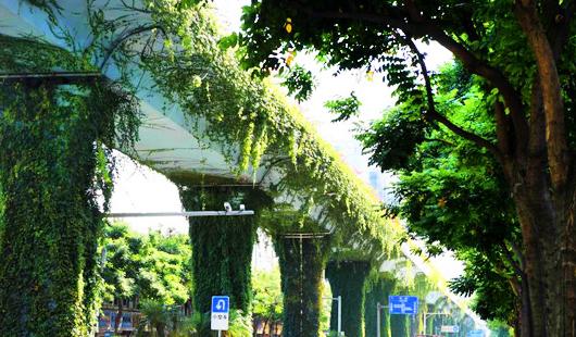 """厦门快速公交(BRT)高架桥披""""绿衣"""""""