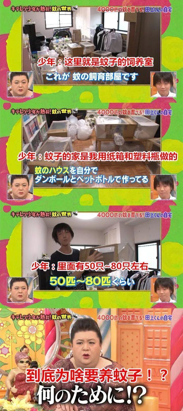 日本18岁天才少年,在家中饲养4000只蚊子?