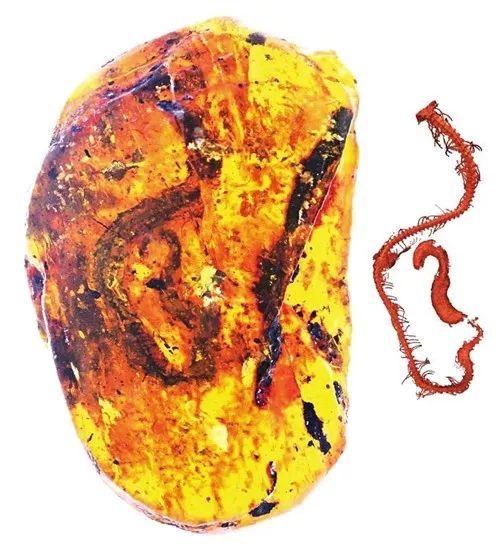 ca88亚洲城手机版下载,ca88亚洲城手机版,ca88亚洲城手机版注册,ca88亚洲城手机版下载,ca88亚洲城手机版登录_三明85后科学家鉴定世界首枚蛇类琥珀 9900万年前的小蛇藏在其中