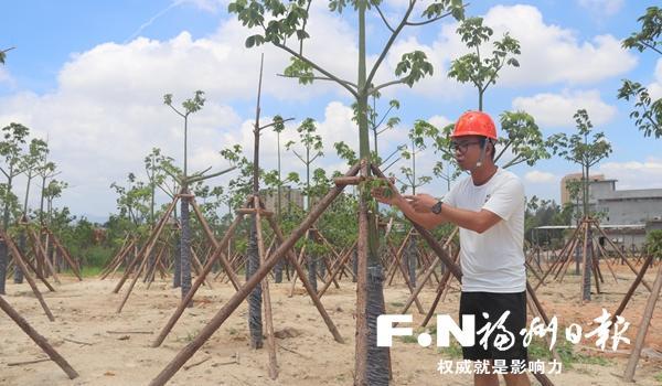 滨海新城森林城市景观带完成苗木种植