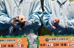 华南大熊猫基地喜迎双宝
