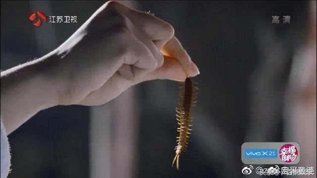 香蜜沉沉烬如霜:杨紫手抓老鼠,邓伦生吃真蜈蚣?这才是演员