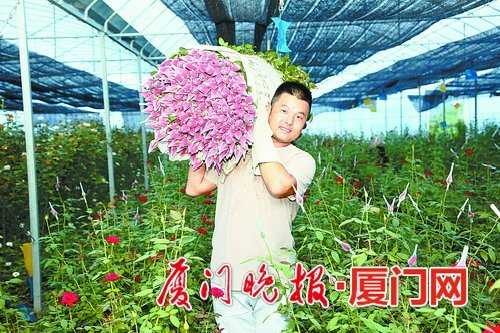 澳门银河娱乐网站本地玫瑰花供不应求 花农包装玫瑰花都要戴上厚手套