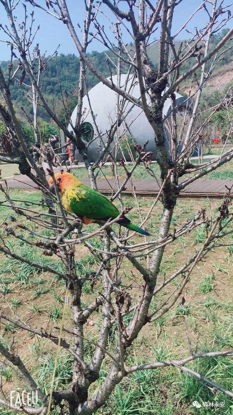 永安市民网购一只鹦鹉,结果给自己惹下了大麻烦!