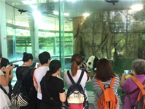 """大熊猫""""莉莉""""过26岁生日 上海粉丝来成都庆祝"""