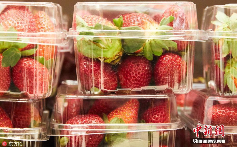 澳大利亚草莓藏针是想害人吗?澳大利亚在草莓藏针的人是谁?