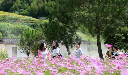德化雷峰镇:百日花、雏菊齐开放 引来众游客