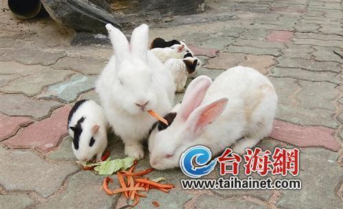 """廈門生態環境改善 不少野兔跑到動物園里""""定居"""""""
