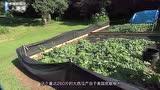 老外种出260斤的大西瓜