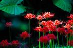 福州西湖公园:金秋十月 共赴繁花之约