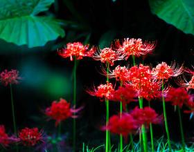 福州西湖公園:金秋十月 共赴繁花之約