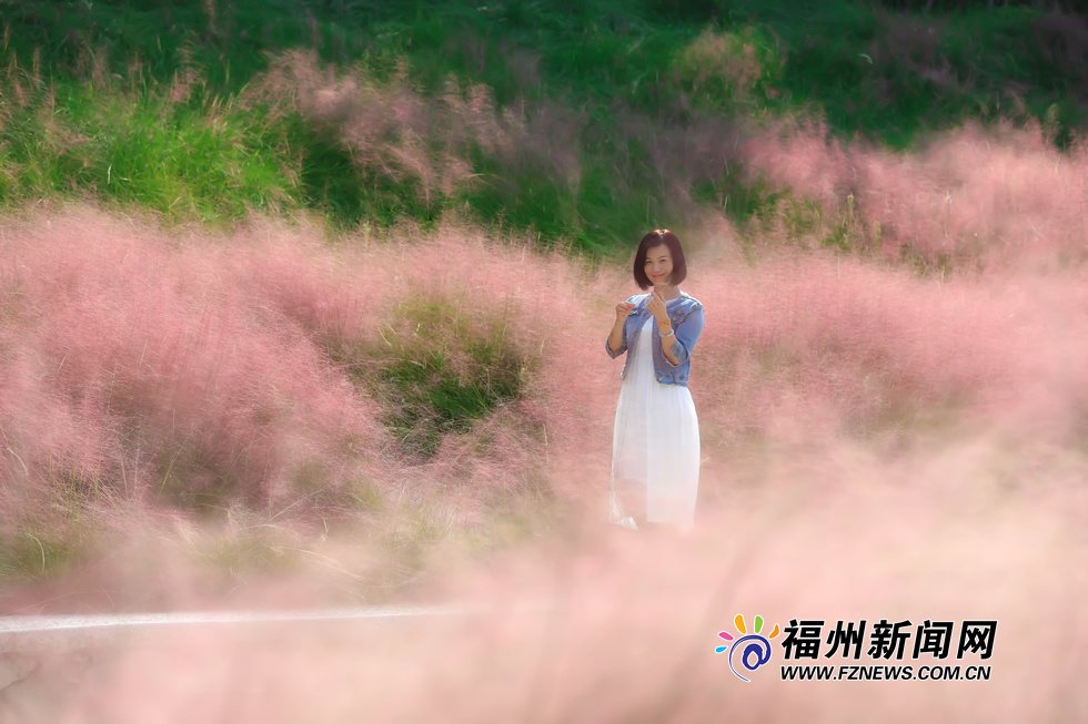"""金秋时分 福州牛岗山公园变身""""粉红海洋"""""""